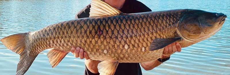 amour blanc poisson