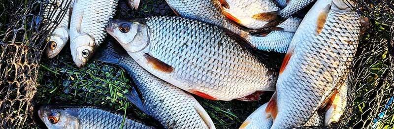 gardon poisson